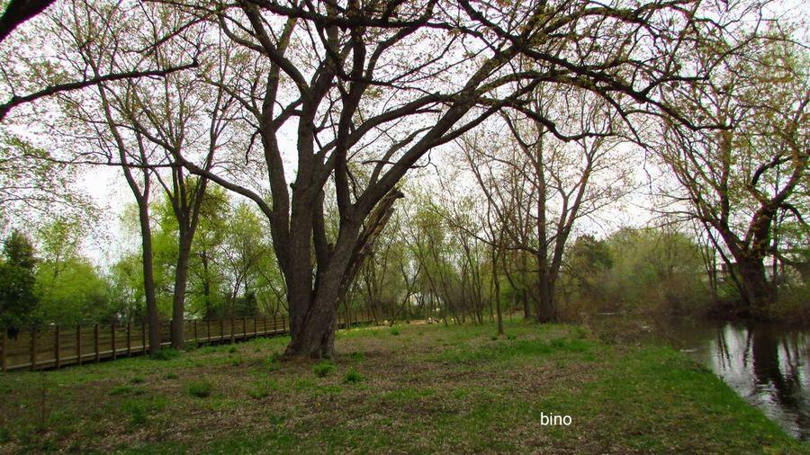 Walking Around My Neighborhood Landscape Clam River Walkway Becoming Green Cadillac Michigan