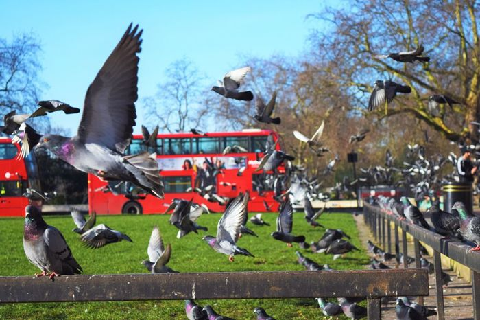Photography In Motion Photooftheday Showcase: April 2016 Showcase: April Pidgeons London VSCO Vscocam The Week On Eyem The Tourist Hanging Out