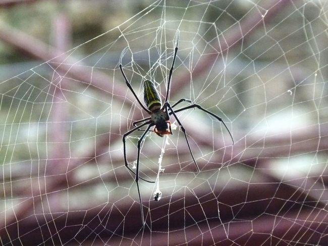 Spider Cambodia Animals Animal Travel Nature Animaltime Animal And Nature паук пауки паутина