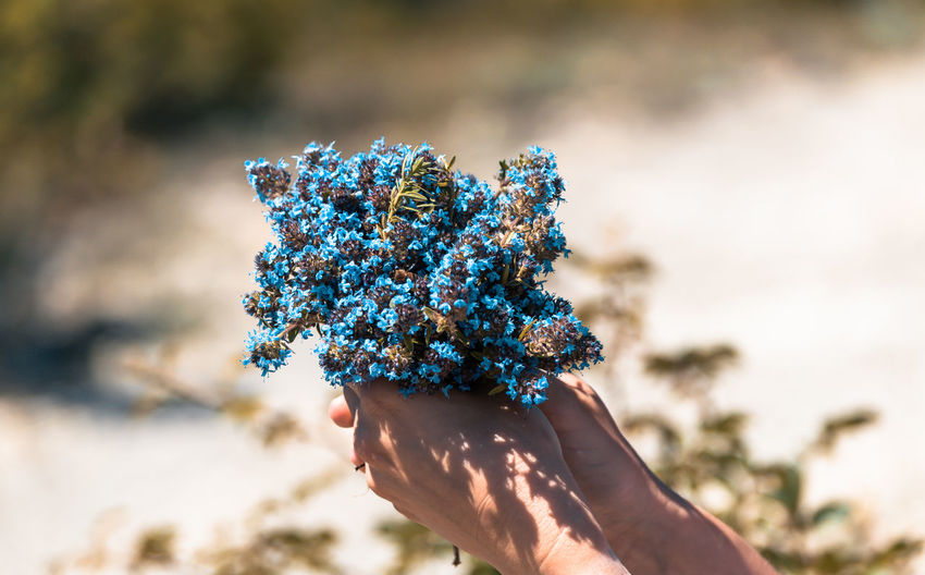 Close-up of hand holding blue flower