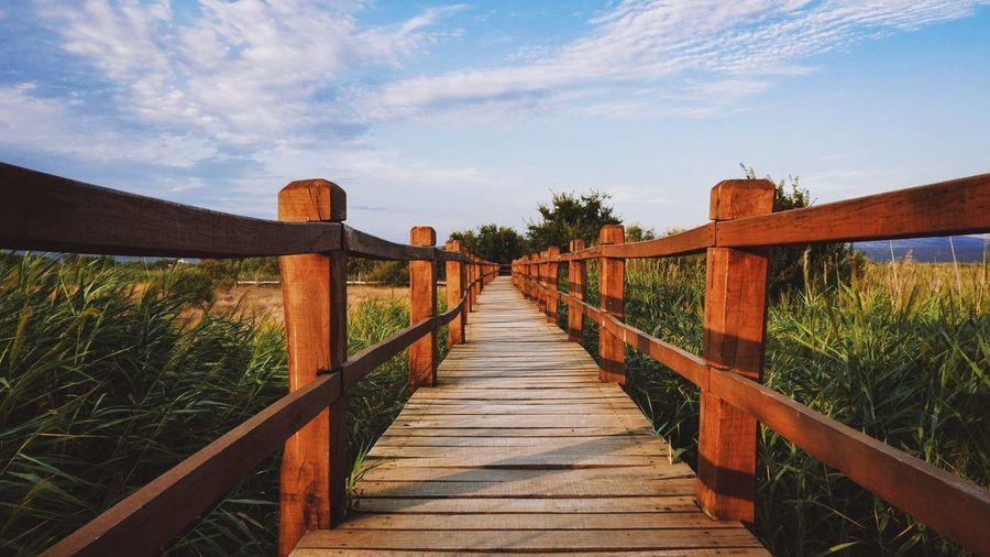 Wooden footpath, natural tones, blue sky.