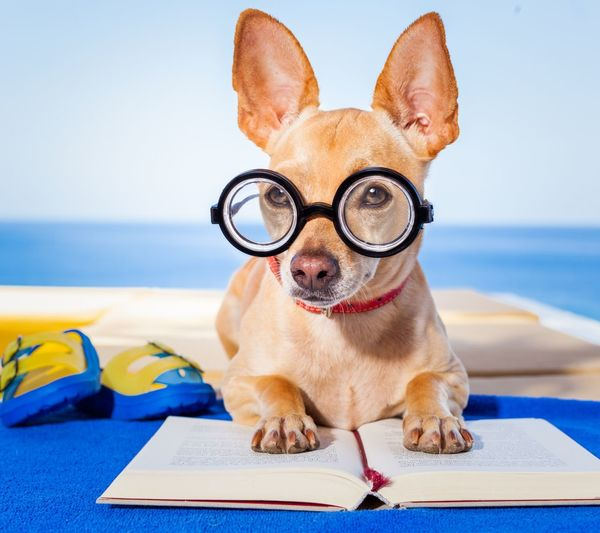 Front View Of Dog With Eyeglasses Reading A Book