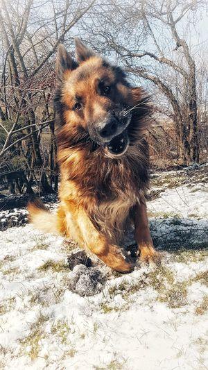 Pets Dog Sand