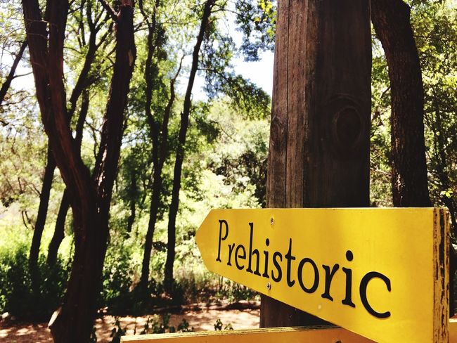 Prehistoric Tree Text Tree Trunk Communication Day Nature Growth No People Outdoors Branch Scenics Beauty In Nature Sky Close-up