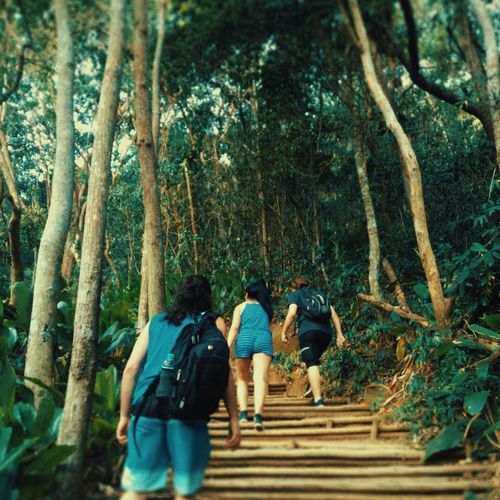 Tree Walking Rear View Full Length Real People Day Growth Nature Outdoors Urca EyeEmNewHere Green Color Leaf Freshness EyeEm Selects EyeEm Best Shots Beach Travel Destinations Morro Da Urca Rio De Janeiro Brazil Landscape Vacations Trilha Plant Lost In The Landscape