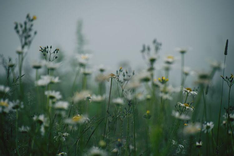 Flowers Blooming On Field
