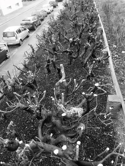 High Angle View Plant Nature Day No People Outdoors Tree Burnt Prune Black And White Black & White