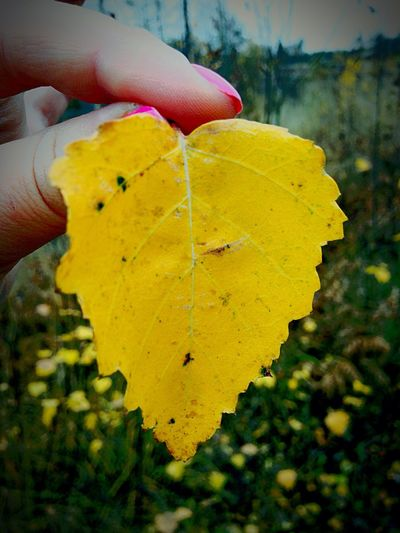 Beauty In Nature Person Focus On Foreground One Person Close-up Human Body Part Real People Holding Leaf Change Outdoors Day Yellow Nature Fall is so magical !