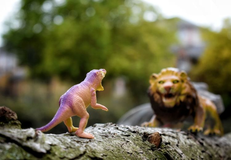 Close-up of toys. lion and dinosaur