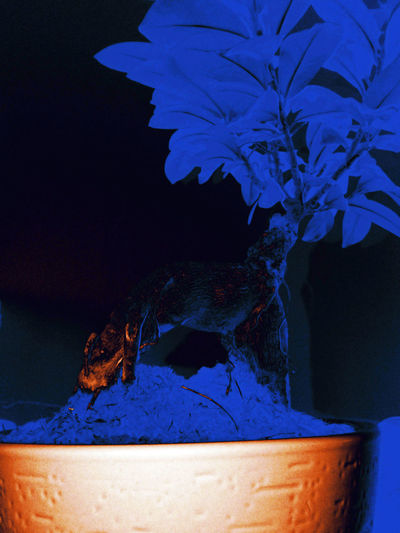 2nd version - blue trunk plus abstract pattern on orange gradient pot - bonsai Illuminated Plant Barks Bark Texture Blue Night Bonsai Tree Bonsai Trunk Little Plant Theme Blue Leaves Contrasted Tree Part Abstract Pattern Pot Plant Blue Close-up