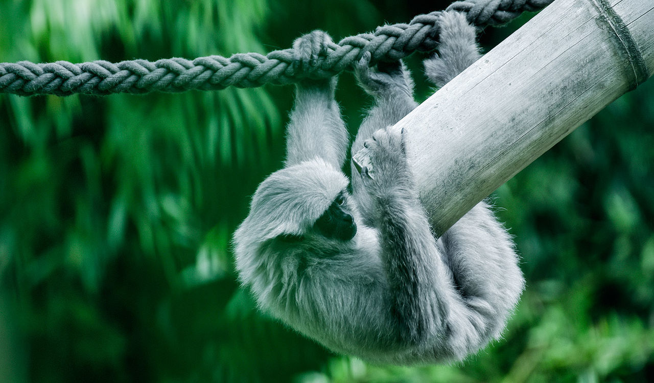 rope, focus on foreground, no people, outdoors, day, close-up, nature, grass, mammal, animal themes