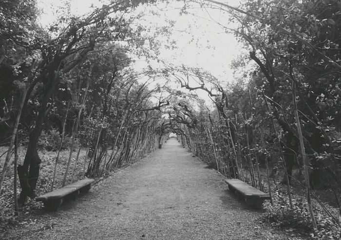 Nature Beauty In Nature Tranquility Florence Italy Florence Bnw_collection Bnw_life Blackandwhitephoto Bnw Blackandwhitephotos Blackandwhite Blackandwhitephotography Black And White Bnw Photography Bnwmood Bnw_captures Bnw_of_our_world Travel Travelphotography Firenze Boboli Boboli Garden Boboligardens Boboli_gardens Symmetry