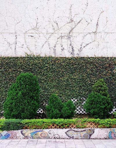 Green Color Wall - Building Feature No People Day Architecture Built Structure Art And Craft Outdoors Wall Plant Ivy Building Exterior Nature Pattern Growth