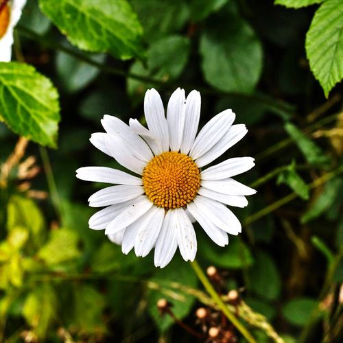 Flower Nature Fragility Freshness White Color Flower Head Beauty In Nature Petal Growth Plant Close-up Blooming Outdoors Day No People