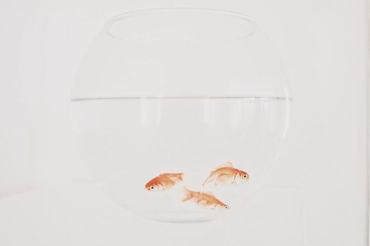Goldfish Aquarium Minimalism Pure White Fish Daily Commute Better Together Smart Simplicity Feeling At Home
