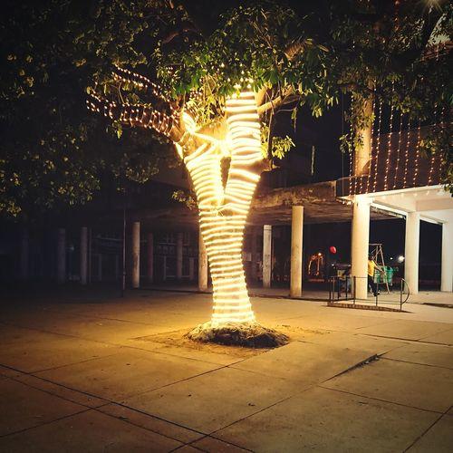Illuminated tree at night