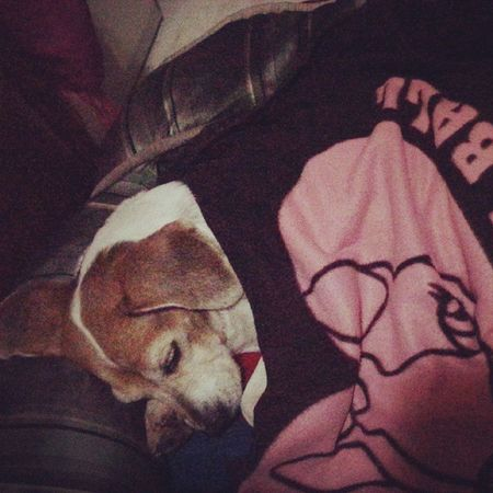 不到9點坐在床前的地毯上等我,原來是要幫她蓋被被睡覺惹Mymilinbaby Beagle