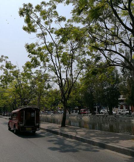 Red Taxi City Life Chiangmai Transportation Chiang Mai   Thailand Tree