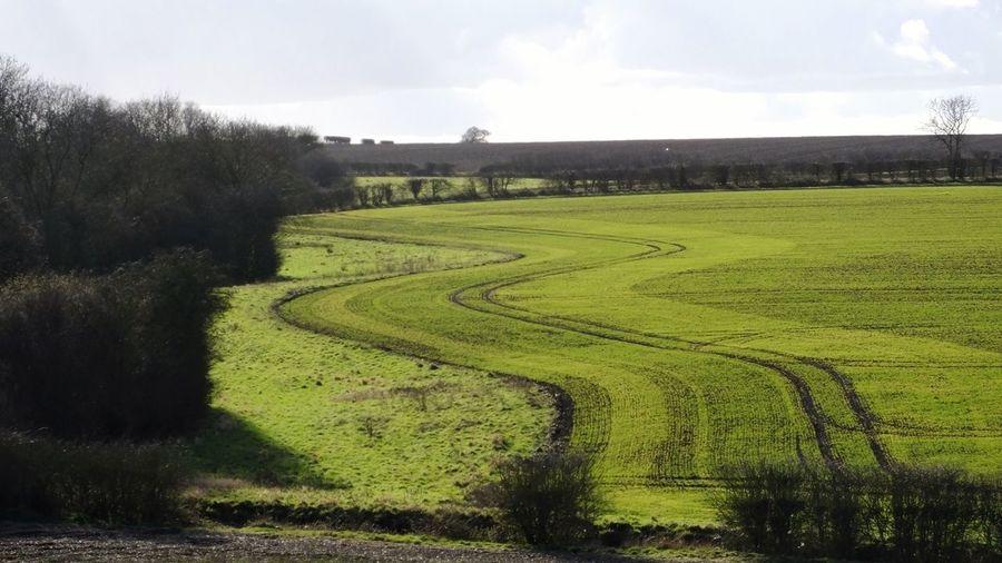 Idyllic shot of green rural landscape against sky