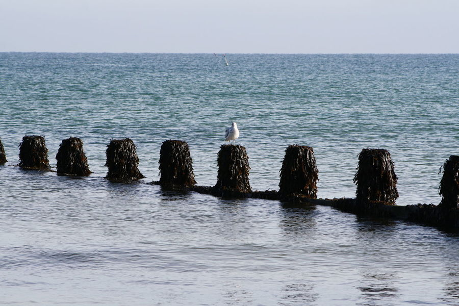 Water Sea Horizon Over Water Tranquil Scene Clear Sky Waterfront Norfolk Uk Cromer Beach Cromer Calm Coastline Scenics Wooden Post Tranquility Rippled Beauty In Nature Nature Seascape Calm Non-urban Scene Majestic Outdoors In Front Of No People Ocean