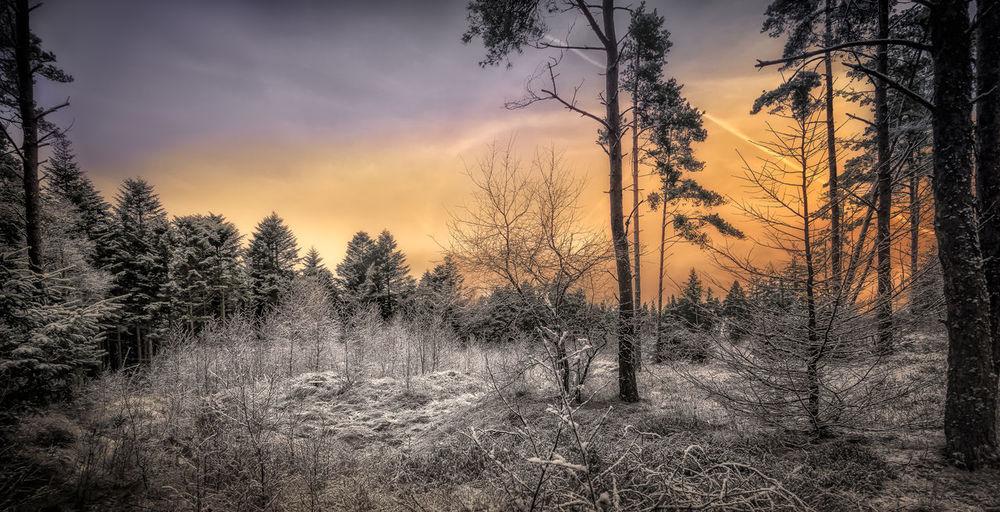 Pinch of Snow