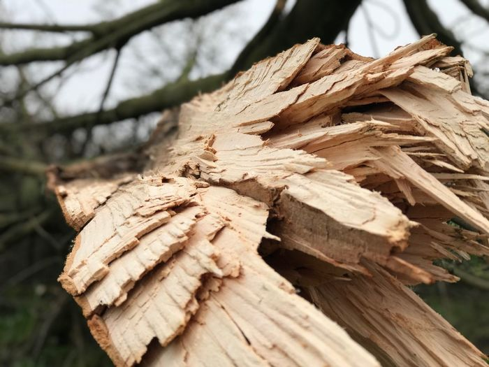 Broken Tree Burst Storm Broken Log Wood - Material Timber Focus On Foreground Day Close-up No People Nature Outdoors Tree