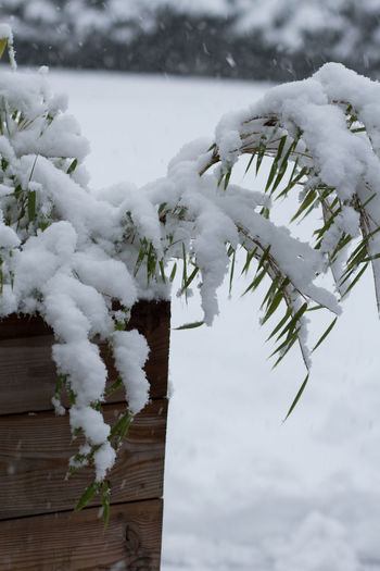 Close-up of snow covered plant