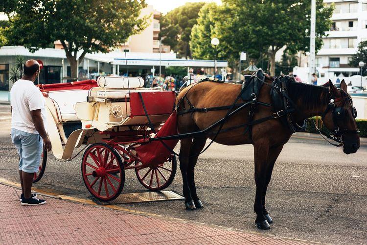Waiting Coach Hello World EyeEm Selects EyeEm Best Shots First Eyeem Photo Kutsche Pferd City Horse Street Cart Transportation Animal Themes Mammal Horse Cart Animal Working Animal
