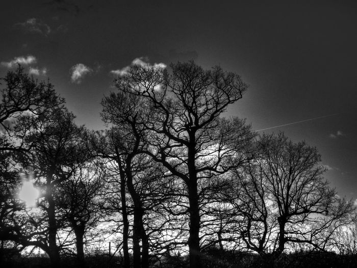 Silhouette Silhouettes B&w Bare Tree Beauty In Nature Black And White Branch Day Landscape Nature No People Outdoors Sky Tree