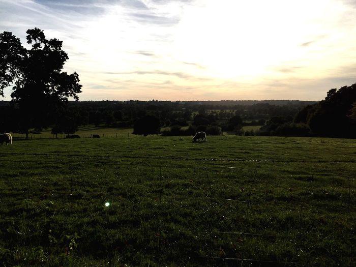 Countryside England Beautiful Nature Sheep