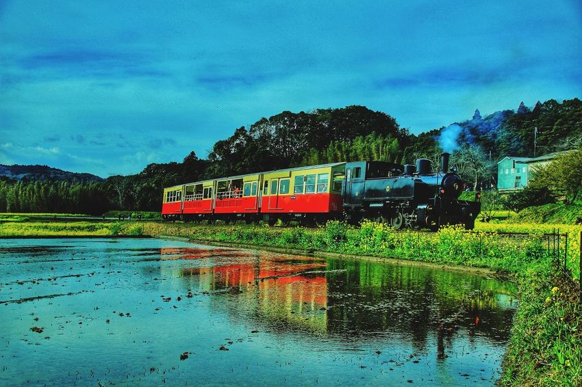 小湊鉄道撮りの人気スポットに行って来ました。一緒に乗ってみたいね。 Reflection Sky 似非撮り鉄 あなたと見隊 あなたを想う 小湊鉄道 菜の花 あなたがいるソラ トロッコ列車