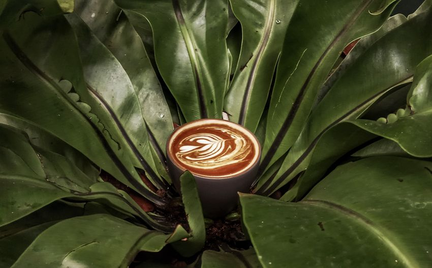 Coffee and Nature Coffee #coffee Time Coffee Cup Coffee Break #eyeemphotography Nature Coffeeandnature Mobilephotography Latte Coffee - Drink Coffee ☕ Coffeelover Coffeeporn Eyeemcoffee Latte Leaf Concentric Spiral Close-up Green Color Blooming Plant Life