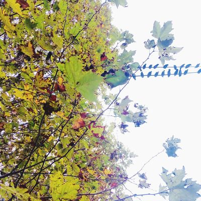 Autumn colors Leaves Autumn Birds Plant Tree Growth Low Angle View Nature Sky Beauty In Nature Green Color Clear Sky Leaf Plant Part Flower Vulnerability  Outdoors