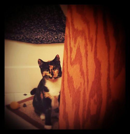 Orchid ❤ Foster Cat Foster Animals Adopt Me Fuzzy Vegan