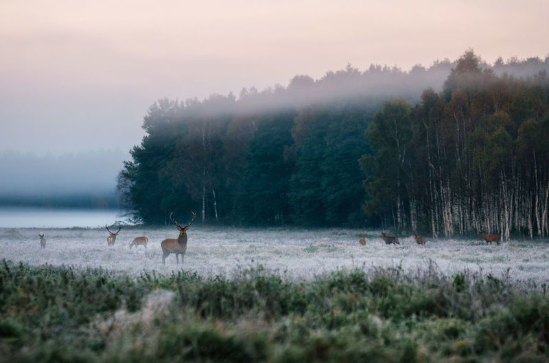 Deer on countryside landscape