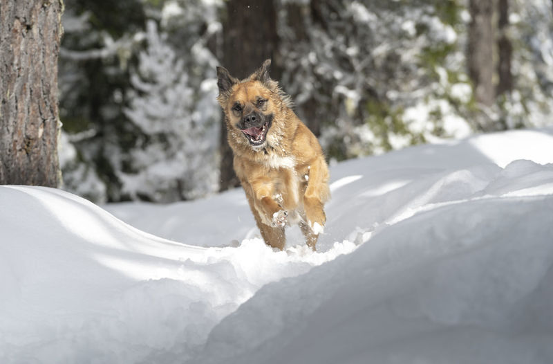 Dog running on snow covered field