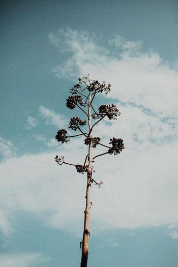 atzavara Atzavara Plant Flower Flower Head Nature Nature_collection Color Tree Sky
