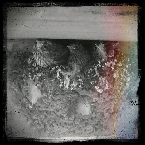Fantastic Four! VSCO B1 Vscocam Birds