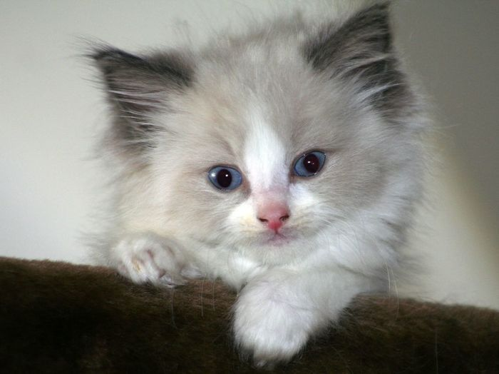 Eyem Cute Cats Kitten Eye4photography  Cute Pets