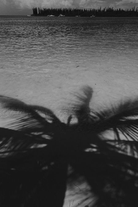 Bnw_friday_eyeemchallenge Playing With Shadows Palm Tree Beach Bnw Shadow