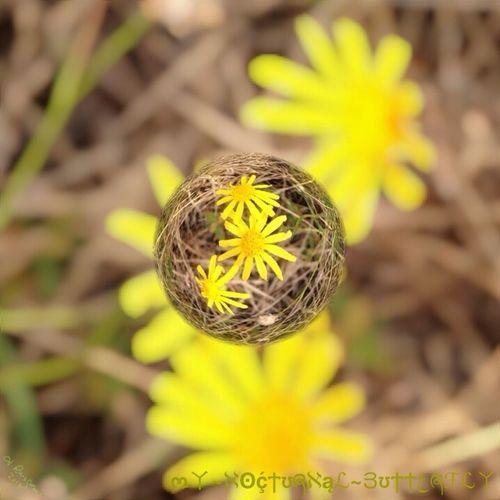 Tesoro En El Marmol Flower Fantasy