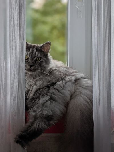 Close-up of a cat looking through window