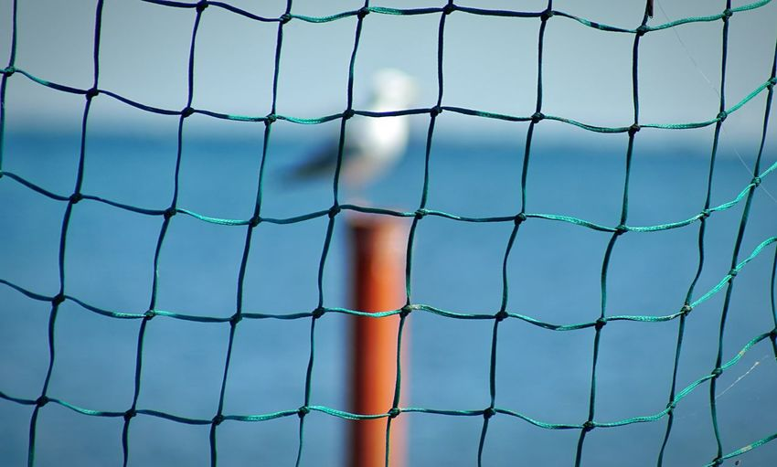 A seagull Fence Sport Net - Sports Equipment Barrier Boundary Full Frame Backgrounds Security Protection Pattern Close-up Day Safety Nature Outdoors Chainlink Fence No People The Creative - 2019 EyeEm Awards
