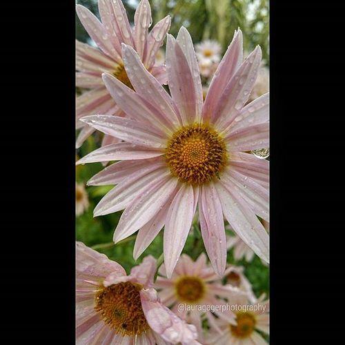 Nikonshots AspiringPhotographer Nikonphotography Nikon Nikon_photography_ Flowers Nature Beauty Longisland