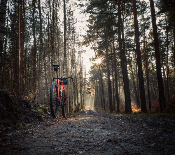 Rear view of man on road amidst trees in forest