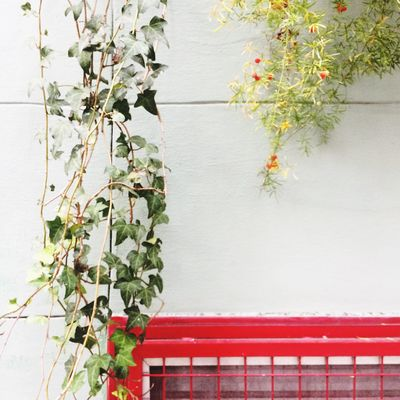 Plant Growth Leaf Plant Part Built Structure Architecture Nature Wall - Building Feature Building Exterior No People Red Freshness Wall Flower Flowering Plant Day