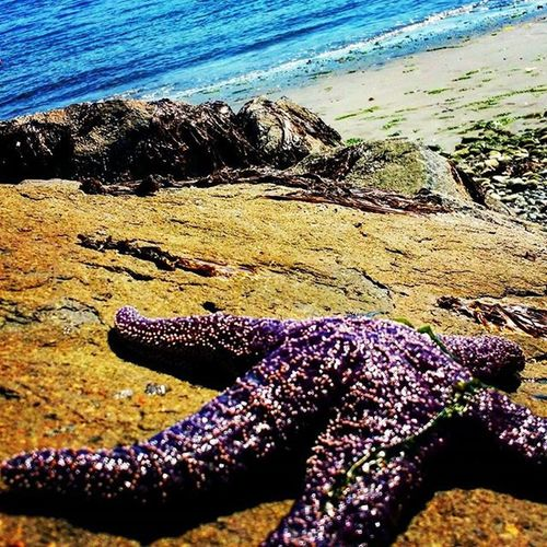 Did the sea