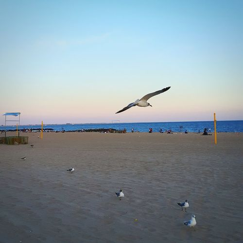 Seagull. Taking Photos Hanging Out Urban Landscape Urban Nature Nature_collection Nature Photography Nature Sunset Sunset_collection NYC Photography NYC EyeEm Best Shots EyeEm Nature Lover EyeEm Gallery EyeEm Brooklyn Coney Island