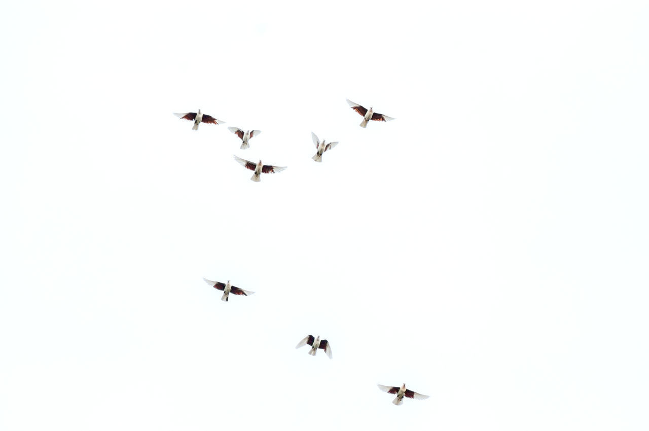 LOW ANGLE VIEW OF BIRDS IN THE SKY