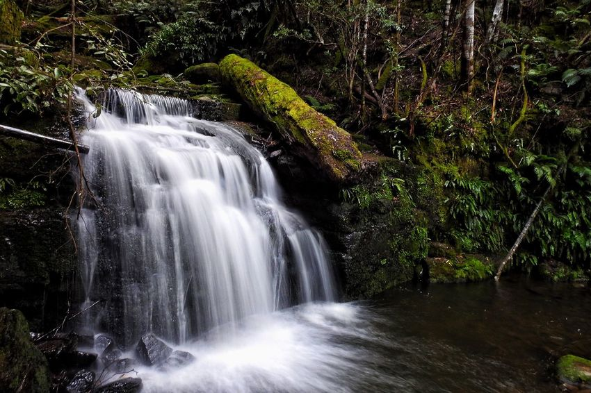 Waterfall Motion Long Exposure Flowing Water Water Blurred Motion Beauty In Nature Scenics Nature No People Forest River Environment Outdoors Rapid Tranquility Tree Day Power In Nature Tasmania